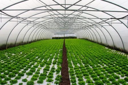 FREMM anima a sus empresas a presentar propuestas para el inminente Plan Renove de Invernaderos